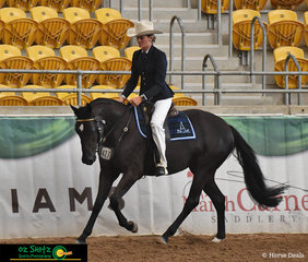 Gracing the AELEC Indoor arena with a beautiful workout in the Snaffle Bit Futurity was Ashley Whiting riding Jilliy Sienna.