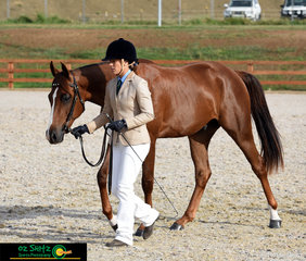 Having a lovely start to the Snaffle Bit Futurity was Brandwood Kingston led by Krystal Blackwell at the 2019 Australian Stock Horse National Show held in Tamworth.