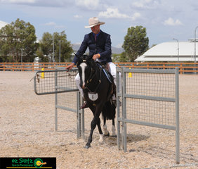 Going through the gate in the Utility pattern of the Snaffle Bit Futurity Challenge is Adam Wilton and Adelle Musician on day seven of the 2019 Australian Stock Horse National Show.
