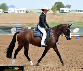 Tracking up nicely is four year old, Adelle Reflection ridden by Michelle Wilton in the Junior Station Horse on day seven at the 2019 Australian Stock Horse National Show.