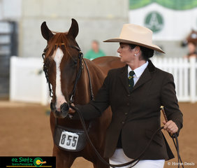 Walking with confidence was Sophie Coe with her Yearling Gelding, Waratah Rivoli Prince Harry at the 2019 Australian Stock Horse National Show.