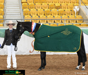 Showing her two year old colt to absolute perfection to take the Champion Led 2 Year Old Colt was Fiona Gordon and Gordonvale Cassius.