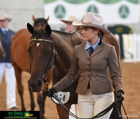 Looking focused in the 3 Year Old Gelding Led Class was Rose Pennington leading Jumping The Gun at the 2019 Australian Stock Horse Nationals.