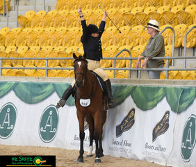 Peakhill Harvey stands quietly while his rider cheers for joy after a great workout in the 3 Year Old English Attire class at 2019 Australian Stock Horse National Show.