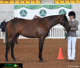 Presenting her 2 Year Old Royalle Bohemian to Judge Heath Andrews in the Fountain of Youth Led class, Charlotte Ramsden looked exceptional this morning.