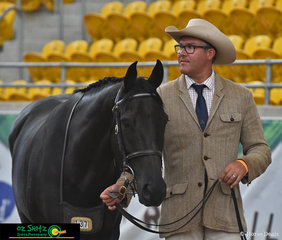 Sporting a serious game face, David Nash with his 4 year old Gelding Bullsye Kidman make their way around the arena.