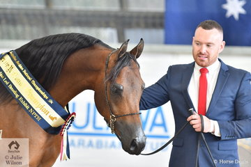 Ricky Carver presented ReAlity Arabians and Future Farms', Satisfy FF, to be awarded Reserve Champion Arabian Led Breeding Exhibit NPTH.