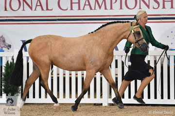 Jodie Cootes', Bumble Bee FF trotted out well in the strong class for Arabian Derivative Junior Filly NPTH.