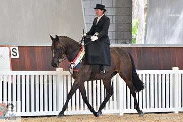 Alandi Durling riding her Sienna Conchetta gave a very polished Side Saddle riding display to be declared Champion Ladies Side Saddle Champion.