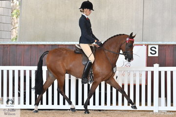 Jessica Dertell rode Ron Campbell and Future Farm's, Kizashi to be declared Reserse Champion Arabian Derivative Silver Snaffle for 4 and 5 year olds.