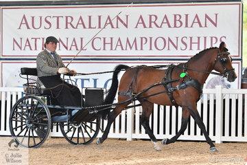 Arreton Arabians, Malleegrove Mandalla was declared Champion in Harness.