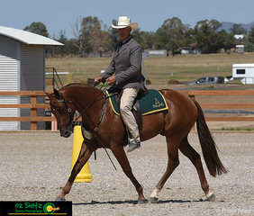 Donrica Trident, the 4 Year Old Stallion won the Novice Hack Class ridden to perfection by Allan Wallen on the second last day of the 2019 Australian Stock Horse National Show.