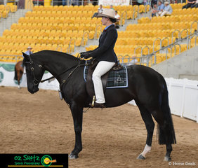 Michelle Wilton stands Adelle Centrefold up ready for inspection for Judge Toni Bull in the Filly 3 Year Old class
