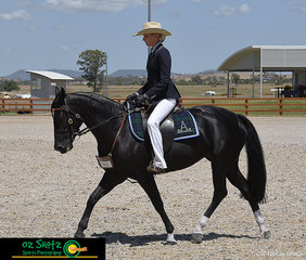 4 Year Old Mare, Silverthorn Oaks Chandelier ridden by Shania Madden, caught the eye of the judge during their workout and winning the Champion Junior Novice Hack at the 2019 Australian Stock Horse National Show.