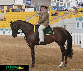 After great success in the Led 4 Year Old class the previous day of competition, Jenny Weule and Nethaway Touch of Class had another great day on the arena taking out Reserve Champion 4 Year Old
