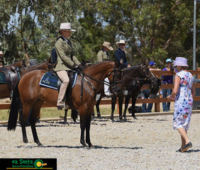 Presenting to the judge was Jemma Maslen riding Waymere Rose in the Novice Hack Mare 5 Years and Over ne 15hh on the second last day of the Australian Stock Horse National Show.