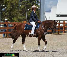 On their way to start their workout in the Novice Hack Mare 5 Years and Over exc 15hh was the beautifully turned out, Kaypehaich Watasplash with Megan Hensley in the saddle at the 2019 Australian Stock Horse National Show.