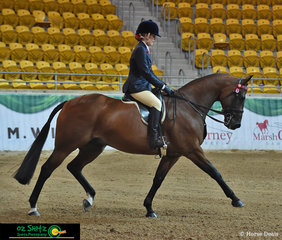 Working out for the judges in the Supreme Hack was Orlanga MK Popcorn ridden beautifully by Kate Schoen.