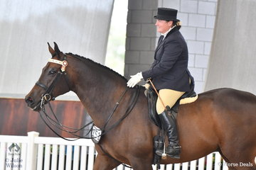 Kristin and Silvio Galea's,'Myth Buster' (Cedarwood Lodge Kumait/Myth Annie NZ) was declared Silver Champion Ridden Anglo Arabian.