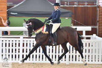 Elouise Lando rode her own and Michelle Lando's, 'Renlim Park Tobias' (Arundel House Amaani/So Charming) to claim the Ridden Anglo Arabian Gold Championship.