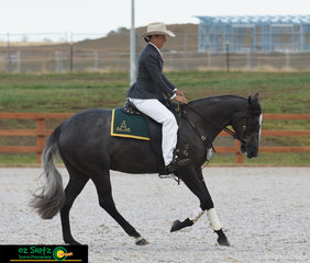 A beautiful ride this morning for Carly Domrow and Sinders Sovereign in the Junior Open working gelding 2yrs and under where Paul Vary Awarded the pair 1st place.