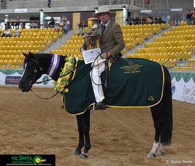 It was the flawless workout from Brandwood Arizona, ridden by Cole Moxey in the Supreme Working Horse of Show on the final day of the 2019 Australian Stock Horse National Show.