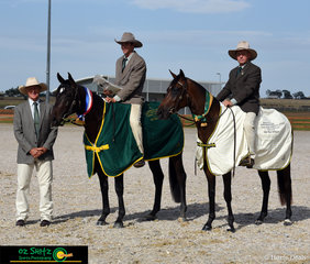 The final day of the 2019 Australian Stock Horse National Show saw Balala Toocool Acres take the title of Champion Working 2 Year old ridden by Mark West and Icewood Fair ridden by Robert Vandyke take Reserve Champion.