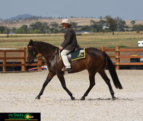 After a long week Robert Vandyke rode Peppertreefarm Cassie in the Junior Open Working Filly 3yrs old to receive 2nd place.