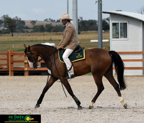 Talawahl Seattle moved lovely under the guidance of Mathew Broome in the Junior Open Working Gelding 3 Year Old on the final day of the Australian Stock Horse National Show.