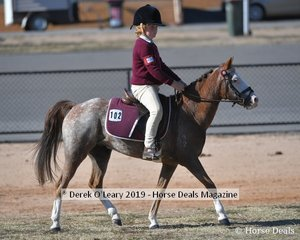 Xavier Watson from Benalla rode Sherendoah Royal Affair in the Mount most suitable for Pony Club 10.2 to 12.2 hh