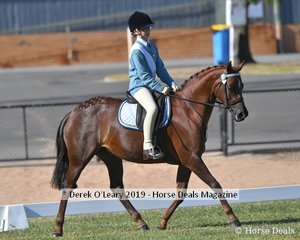 Alexandra Tognella rode KC The Dance representing Hurstbridge in the Best Educated mount 12.2 to 14hh