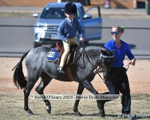 Milla Stone rode Trinket in the 8yo and Under representing Rochester