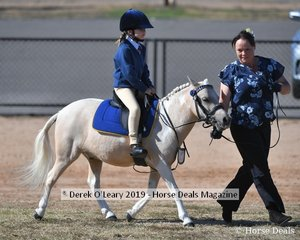 Evie Kelly rode Zarzuu in the Led 8yo and Under Rider Class representing Rochester