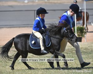 Matilda Evans rode Ladnik Shapur in the 8yo and Under Rider Class