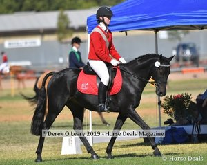 Tanisha Stewart rode Bellarny Park Illusion representing Lancefiled in the 17 and Under 21 Rider