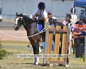 Georgie Acocks rode Malibu Park Rumours in the 9yo and Under 11 games representing Rochester