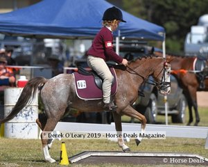 Xavier Watson from Benalla rode Sherendoah Royal Affair in the Games for 8yo and Under