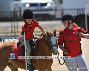 Ben Hamilton from Oaklands rode Perry in the 8 yo and under Led Games