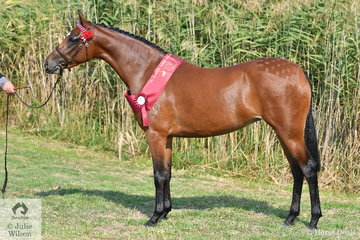 Alison Gell's, 'Summerview Love Song' (Glenvale Reflection/G. Serenade) made Top Five in the Arabian Riding Pony Filly/Colt Three Years and Under Championship.
