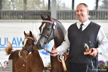 A smiling trio. Rick Brown is pictured with his and Sarowan Park's lovely nomination,'Sarowan Park Paronella' (Shiranna Valentino/SP Pinup Girl) with a showy foal, Sarwon Park Pruise at foot, that was declared Bronze Champion Arabian Pony Senior Mare.