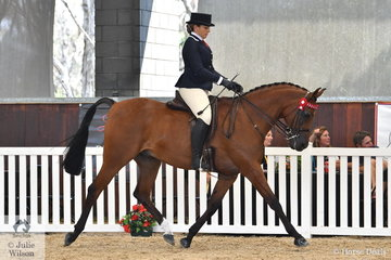 Elouise Lando rode Meaghan and Charlotte Wright's, 'Rapid Fire' (Magnum Forty Four/Fire Flame) to  take out the Ridden Arabian Gelding Bronze Championship.