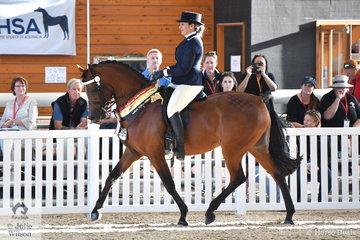 Elouise Lando rode South Serenity Arabians', 'Mystica Abbas' (LC Prince Magnum/Princess of Marwan) to claim the Purebred Arabian Ridden Stallion Gold Championship.