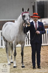 A dapper Ricky Carver, pictured with the ReAlity Arabians and Future Farms nomination, 'Allegiant MI' won the Fashions On The Field Under 40 class.