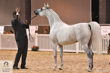 Scott Henshaw did the honours with Renee Edwards', 'MI Aphrodite' (Guiliano/Audacia) that was declared Purebred Arabian Senior Mare Silver Champion.