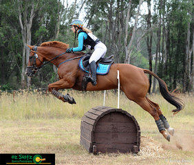 Smashing the cross country phase of the One Star Eventing class and easily clearing fences, Melinda Ryan and Lady of Pearls compete at the NSW Interschool State Championships.
