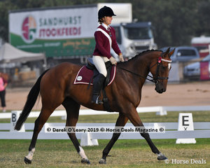 "Zoe Lloyd rode ""Maori Prince"" in the Grade 3 Dressage representing Nyah on the ""Nyah Nuts"" team"