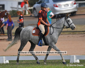 """Roslyn Tait rode """"Fasah on the Edge"""" in the Grade 3 Dressage representing Marybrough"""