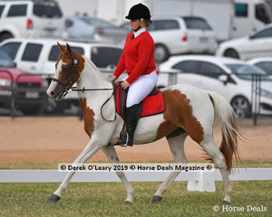 Cloe Kristy from Oaklands riding Shanghi Kid in the Grade 4 Dressage