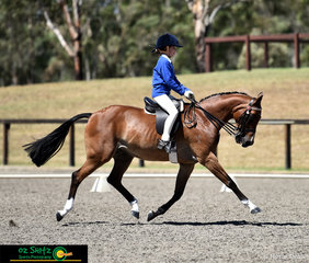 This pair has all the moves! Madi Nolis and Kolbeach Honours lengthen their way across the arena with great power and elevation in Primary Show Horse.
