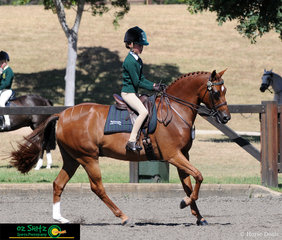 Year 5 rider for Wollondilly Anglican College, Olivia Carter and NSJ Town Crier impress onlookers with their beautiful test in the Show Hunter Primary class.